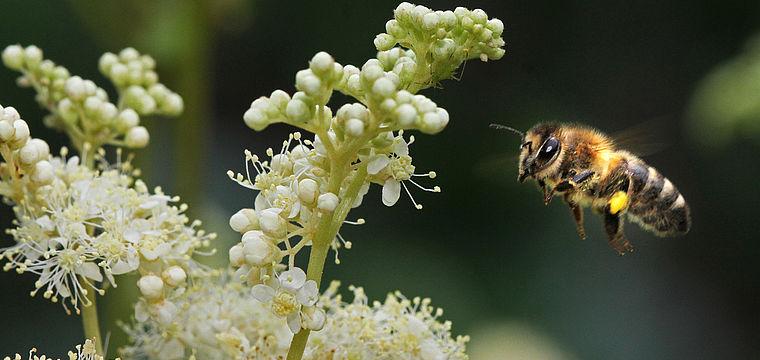 Aktionstag rund um die Biene zum Tag der Deutschen Imkerei
