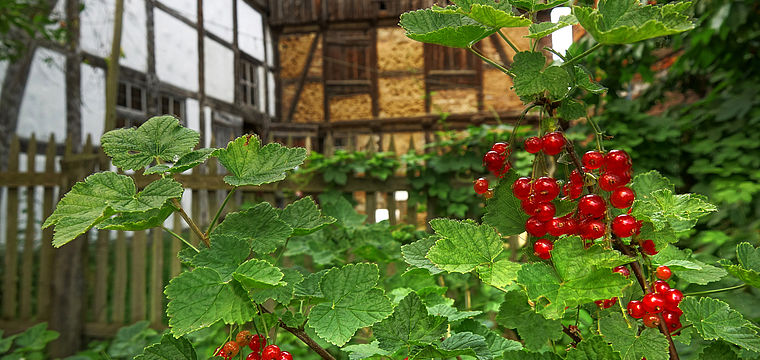 Gartenführung: Spaziergang durch die ländlichen Gärten