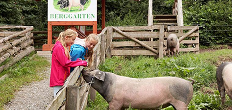 NaTourErlebnisführung Lippisches Weideschwein
