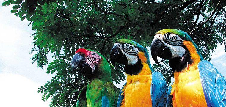 Saisonstart im Vogelpark Heiligenkirchen
