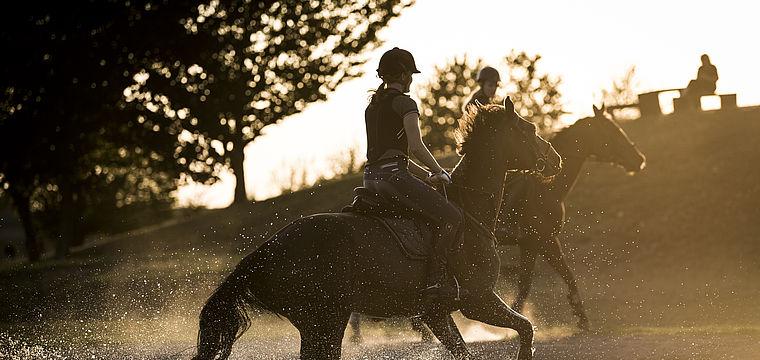 Fotoausstellung: Erzähl mir was vom Pferd!