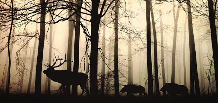 NaTourErlebnis Kleine Tierfilmer